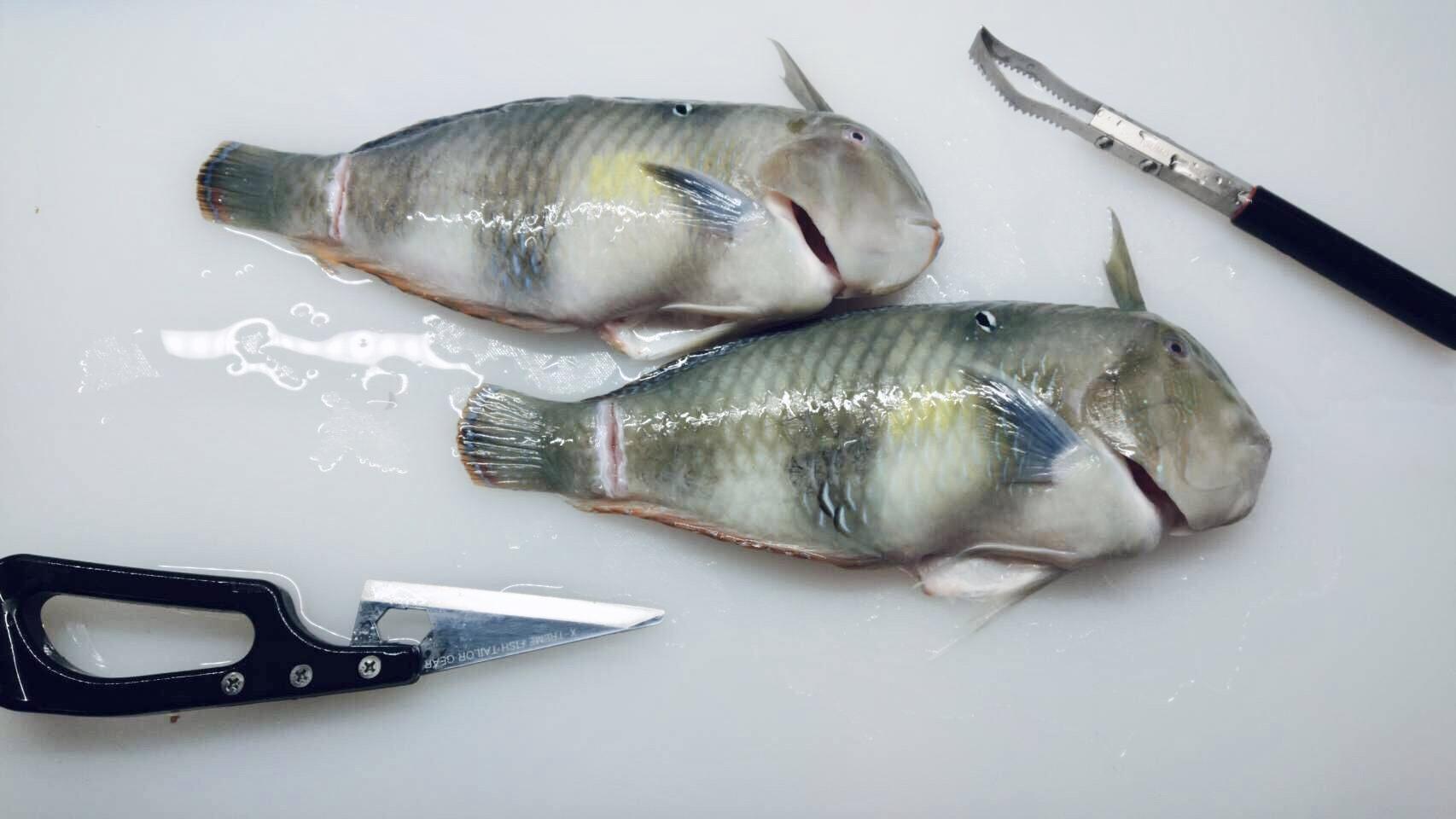テンス 未利用魚
